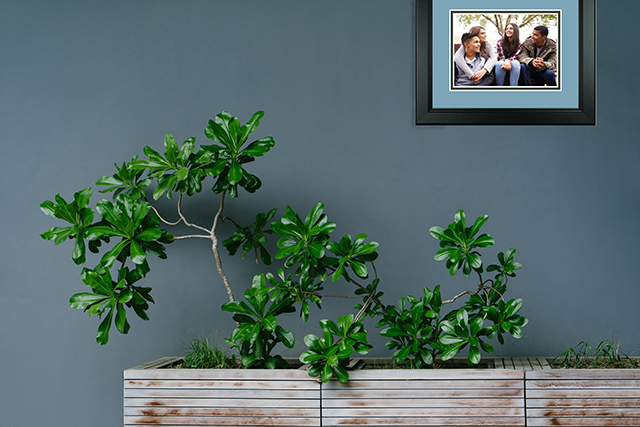 frame with houseplants